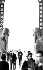 Lamassu watching over us -      (canaanite98) Tags: berlin history museum architecture gate iraq culture babylon nineveh ishtar lamassu assyria pergamon assyrians chaldean