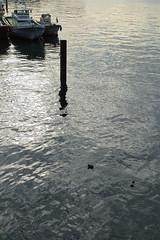 20160204-DSC_8293.jpg (d3_plus) Tags: street morning nature japan river 50mm nikon scenery outdoor daily  streetphoto yokohama nikkor    dailyphoto  50mmf14 thesedays      50mmf14d  nikkor50mmf14    afnikkor50mmf14 d700 kanagawapref  nikond700 aiafnikkor50mmf14  nikonaiafnikkor50mmf14