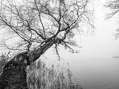 Überragend 1 (Panasonikon) Tags: bw tree see lake wide weitwinkel geäst überragend gvario14140 lumixdmcg70 panasonikon baum