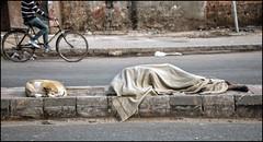 INDIA7597 (Glenn Losack, M.D.) Tags: street people india animals portraits photo photographer fairs homeless prayer festivals photojournalism varanasi muslims pushkar kashi leprosy begging scenics deformed banaras photojournalist mathura sadhus hindus melas vindravan glennlosack