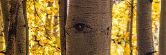 Sony A7RII Bishop California Fine Art Autumn Landscapes! Dr. Elliot McGucken Fine Art Photography! (45SURF Hero's Odyssey Mythology Landscapes & Godde) Tags: autumn fall nature fallcolors fineart wideangle autumncolors foilage a7 fineartphotography naturephotography sonnar wideanglelens naturephotos fallfoilage tfe fineartphotos a7r autumnfoilage fineartphotographer fineartnature sonya7 elliotmcgucken sonya7r elliotmcguckenphotography elliotmcguckenfineart sonya7rii a7rii a7r2 55mmf18zalens masterfineartphotography sonya7r2malibufineartlandscapessunsetssonya7riisony1635mmvariotessartfef4zaossemountlensdrelliotmcguckenfineartphotography sonya7riibishopcaliforniafineartautumnlandscapesdrelliotmcguckenfineartphotographysonya7r2