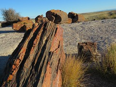 On the Giant Logs Trail #4 (jimsawthat) Tags: arizona rural route66 highdesert petrifiedforestnationalpark petrifiedwood