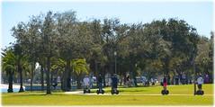 Northshore Park - St Petersburg, Florida (lagergrenjan) Tags: park beach st palms tour florida north petersburg shore segway