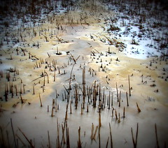 IMG_7083 (Mat_B) Tags: park winter brown lake cold reed nature water cat photography melting natural state walk tail january hills swamp area moraine thaw defiance 2016