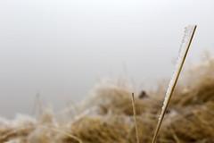 _MG_1014 (schamrock77) Tags: winter italy mountain ice freezing natura inverno montagna friuli ghiaccio galaverna canon6d 35f2is