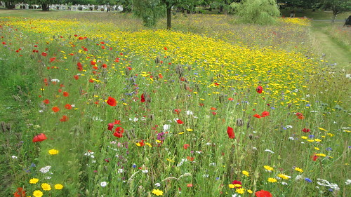 Wild Flower Meadow Bournemouth Cemetery by Chris Colledge