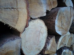 Project 366 - 038/366 - 02/07/2016 (Stphane Juban) Tags: wood lg hdr nexus project365