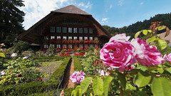 Rosen im Bauerngarten (bolliger51) Tags: rose schweiz rosa haus bern che rosen garten bauernhof hof bauerngarten emmental bauernhaus kantonbern walmdach bowil schweizsuissesvizzeraswitzerland