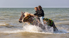 Horses in the surf (BraCom (Bram)) Tags: sea horse holland beach strand canon surf waves widescreen nederland sunny folklore zeeland zee nl splash 169 rider branding renesse paard drafthorse schouwenduiveland golven werkpaard evenement zonnig ruiter powerhorse canonef70200mm strao trekpaard spetteren noordwelle bracom straô canoneos5dmkiii bramvanbroekhoven beachrenesse