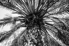 sony dsc002572 (Ricymar Photography (Thanks to all the fans!!!!)) Tags: wallpaper nature landscape creta crete sonydslr isladecreta islandofgreece islandofcrete