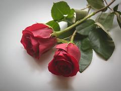 Happy Valentine's Day (Leticia Roncero) Tags: roses love valentines romantic rosas redroses enamorados happyvalentinesday dadesanvalentn