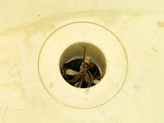 sink laundry drain (seanduckmusic) Tags: water plumbing fountains sinks drains witsendep