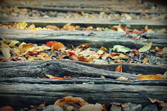 IMG_2708 (M Tuttle Photography) Tags: wood nature leaves outdoor tracks railraod
