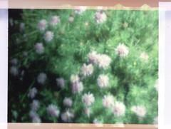 night flowers (troutfactory) Tags: 2001 flowers film night blurry 110 archive sanfranciscobayarea analogue minolta110slr kodak110