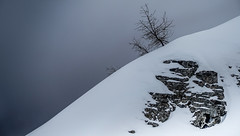 fishbones and rocks (korinthography *m.o.t.o*) Tags: trees winter white alps tree art switzerland rocks kunst hiver wintertime moutains fishbone sonarx100m3