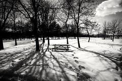 Snow & shadows at the park (vinnie saxon) Tags: park trees winter shadow blackandwhite snow monochrome silhouette contrast nikon tokina1224 nikoniste d5300