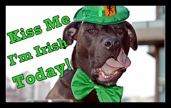 Kiss Me I'm Irish Today! (FuKnLudN) Tags: irish dog pitbull kissme kissmeimirish stpatrickdaymemes