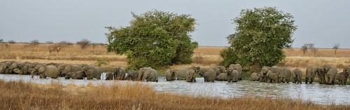 Bain des éléphants, parc de Waza, Nord Cameroun