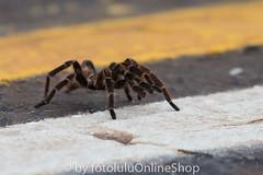 Argentinien_Insekten-53 (fotolulu2012) Tags: tierfoto