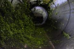(atacamaki) Tags: green tea f14 fujifilm    23mm xt1  jpeg atacamaki