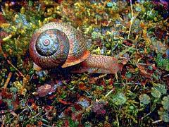 Snail2Dream1 (Bugldy99) Tags: nature animal photomanipulation manipulated surrealism shell snail surreal manipulation photomanipulated fotomanipulation fotomanipulated photosurrealism fotosurrealism
