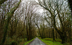 Lands of Cregg Castle, Ireland (clasanno) Tags: trees ireland nature woodlands path landsape greenforest