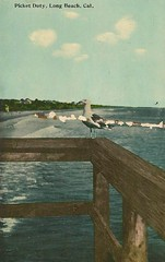"""""""Picket Duty, Long Beach, CA"""" (912greens) Tags: ocean california sea seagulls birds waves pacific gulls longbeach postcards rails beaches balconies"""