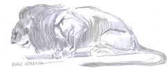 leon a lapiz (ivanutrera) Tags: wild animal pencil sketch wildlife lion lapiz leon draw dibujo lpiz dibujoalpiz