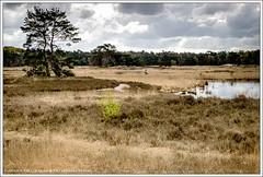 Langven, Sonse Bossen, Nederland (hypnotixed.com) Tags: nederland natuur wolken lente ven landschap noordbrabant staatsbosbeheer leefilters sonsebossen ndgrad09hard sonseheidelangven