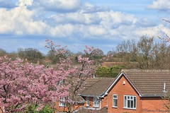 Spring (cattan2011) Tags: flowers houses roof england sky clouds landscape estate cherryblossom midland traveltuesday