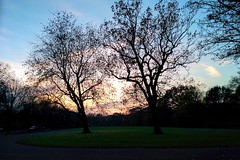 IMG_20141128_155104 (xabirequejo) Tags: park trees london nature outdoors outline regentspark runningtrack regentsparkrunningtrack