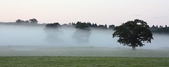 Evening mist of the A811 (Ray Crabb) Tags: trees mist tree evening 2014 drymen scotchmist a811
