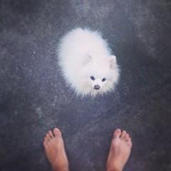#bali #munduk #adityahomestay #miki #cenestpasunpokemon #dog (djulinho) Tags: bali dog miki munduk uploaded:by=flickstagram instagram:venuename=adityahomestaymundukvillage instagram:venue=274640317 instagram:photo=80712525325153214416134992 adityahomestay cenestpasunpokemon