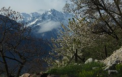 avril (bulbocode909) Tags: nature suisse vert arbres nuages printemps valais montagnes
