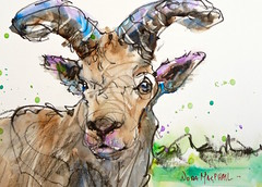 """""""strong silent type"""" - watercolour (Nora MacPhail) Tags: animal pencil watercolor sheep daily charcoal painter watercolour mountainsheep dailypaintworkschallenge"""