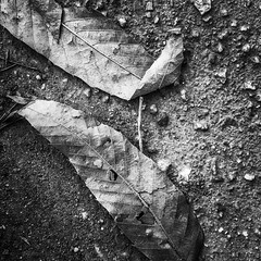Something connects us.., (i2pixel) Tags: blackandwhite texture textura blancoynegro nature monochrome leaves mono bnw