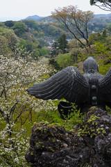 20160410-DSC_7931.jpg (d3_plus) Tags: sky plant flower history nature japan trekking walking temple nikon scenery shrine bokeh hiking kamakura fine daily bloom  28105mmf3545d nikkor    kanagawa   shintoshrine   buddhisttemple dailyphoto sanctuary   thesedays kitakamakura  28105   fineday   28105mm  holyplace historicmonuments  zoomlense ancientcity        28105mmf3545 d700 281053545 nikond700  aiafzoomnikkor28105mmf3545d 28105mmf3545af aiafnikkor28105mmf3545d