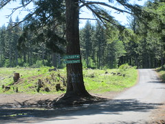 Elk Prairie Road is paved, Family Camp is not (Tysasi) Tags: permanent dnf brevet 160k sawtell200k