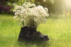 A Breath of Fresh Air (charhedman) Tags: flowers green grass backyard boots bouquet babiesbreath hikingboots