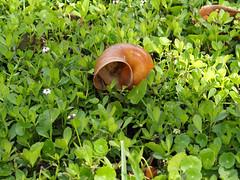 Snail Shell (1 of 1) (John von Friedhof) Tags: park unitedstates florida northamerica leesburg mzuiko45mmf18 olympusem10