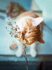 cat and branch (lera_abrakadabra) Tags: cats pets branch rustic meow cutecats catface gingercat tenderly animalphotography catlovers sunnycat mintblue lovelycat petslovers