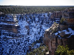 Going down... (France-) Tags: winter arizona usa snow tree forest grandcanyon hiver canyon trail neige february mules arbre sentier fort 144 brightangeltrail