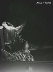 hide and seek. (ambcroft) Tags: blackandwhite bw cats animals vintage samsung gatti animali