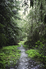 Flooded Trail (Eric Molyneaux) Tags: trees green nature forest outdoors ross fort hiking path trail highway1 flooded caliornia