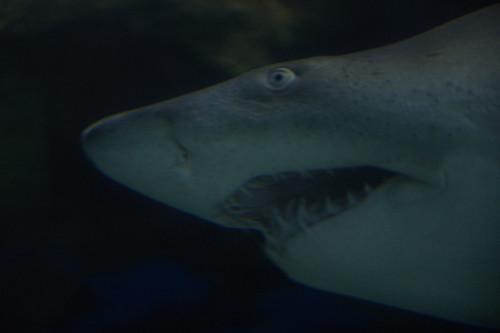 Hungry Shark 2016.01.03.15.39.43