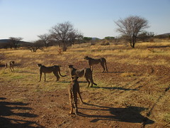 Africa 2015 086 (Absolute Africa 17/09/2015 Overlanding Tour) Tags: africa2015