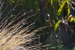 Winter Grass (AndyorDij) Tags: uk winter england grass fly unitedkingdom bokeh rutland 2016 empingham