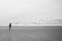 Simple things (fix600) Tags: sea dog white black paris france beach girl birds 35mm landscape happy footprints running le noise plage touquet d610