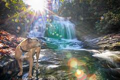 Razzle Dazzle (csnyder103) Tags: rescue water happy waterfall northcarolina lensflare merryfalls canoneos6d tokina1628f28