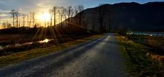Pitt-Paddington Marsh Sunset ( Peterson Photogr@phy  Happy Valentines Day!) Tags: sunset canada nikon britishcolumbia trails marsh mapleridge dike marshland pittlake naturetrails nikond5200 nikonafs18140mmf3556edvr pittpaddingtonmarshwildlifemanagementarea ppmwma